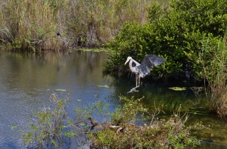 Key West – Everglades
